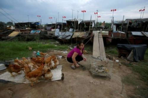 A woman feeds chicken near a wind power system made from plastic buckets at a floating village in Hanoi, Vietnam July 4, 2016. REUTERS/Kham